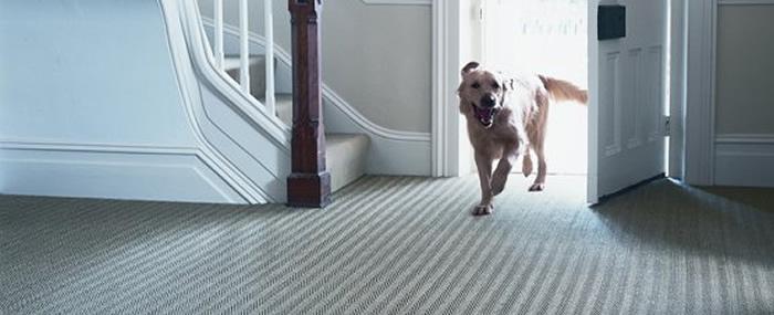 Natural Carpets and Flooring Gaskins